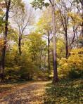 Walking Path through Autumn Forest