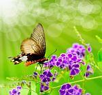 butterfly-on-purple-flower-10090211